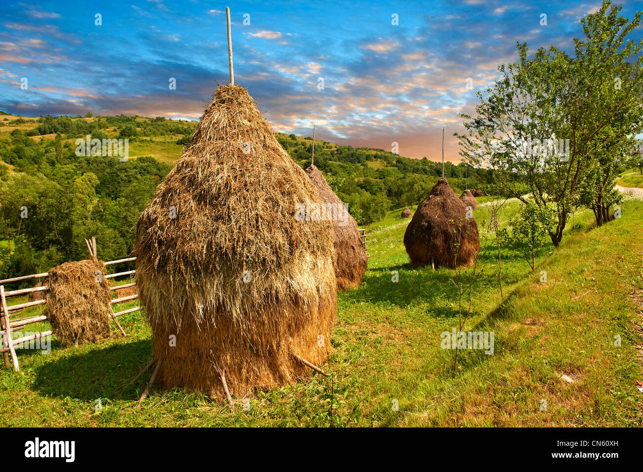 Traditional hay ricks in a wooded field near Sighlet, Maramures, Transylvania - Stock Image