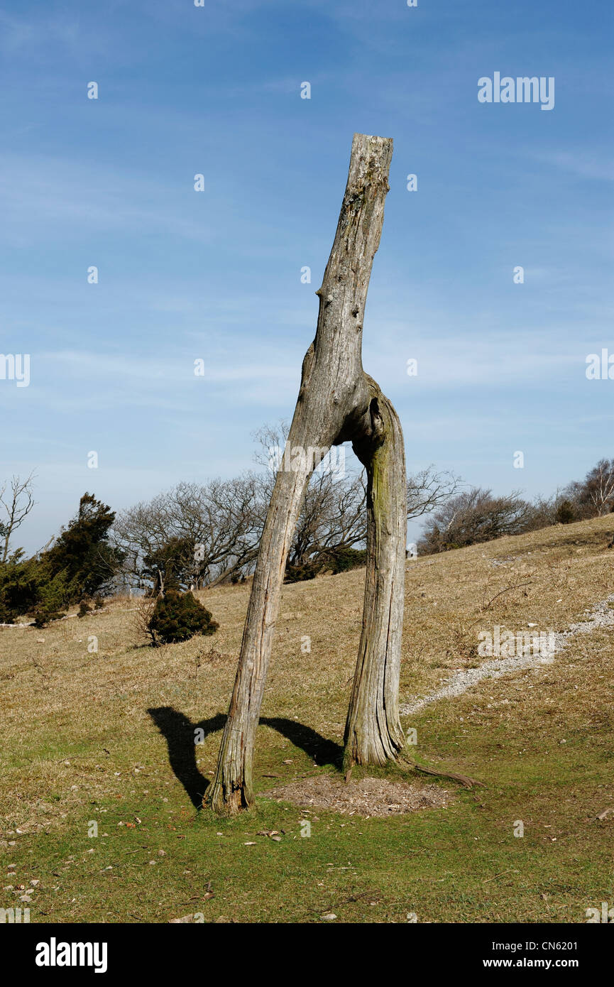 Letter H shaped tree Stock Photo
