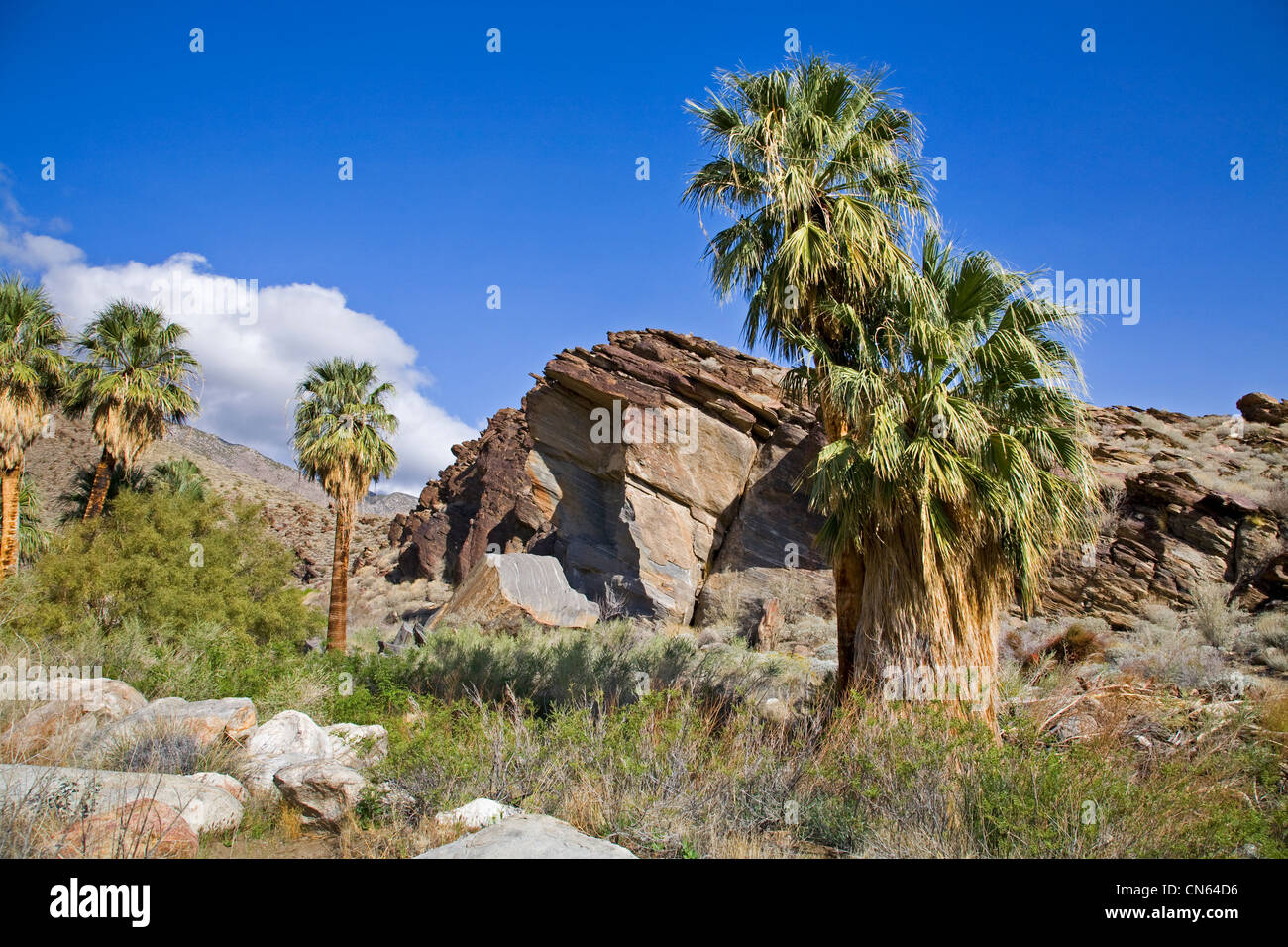 Murry Canyon, Indian Canyons, near Palm Springs, California - Stock Image