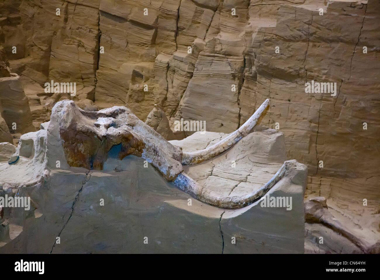 Mammoth Site - Stock Image