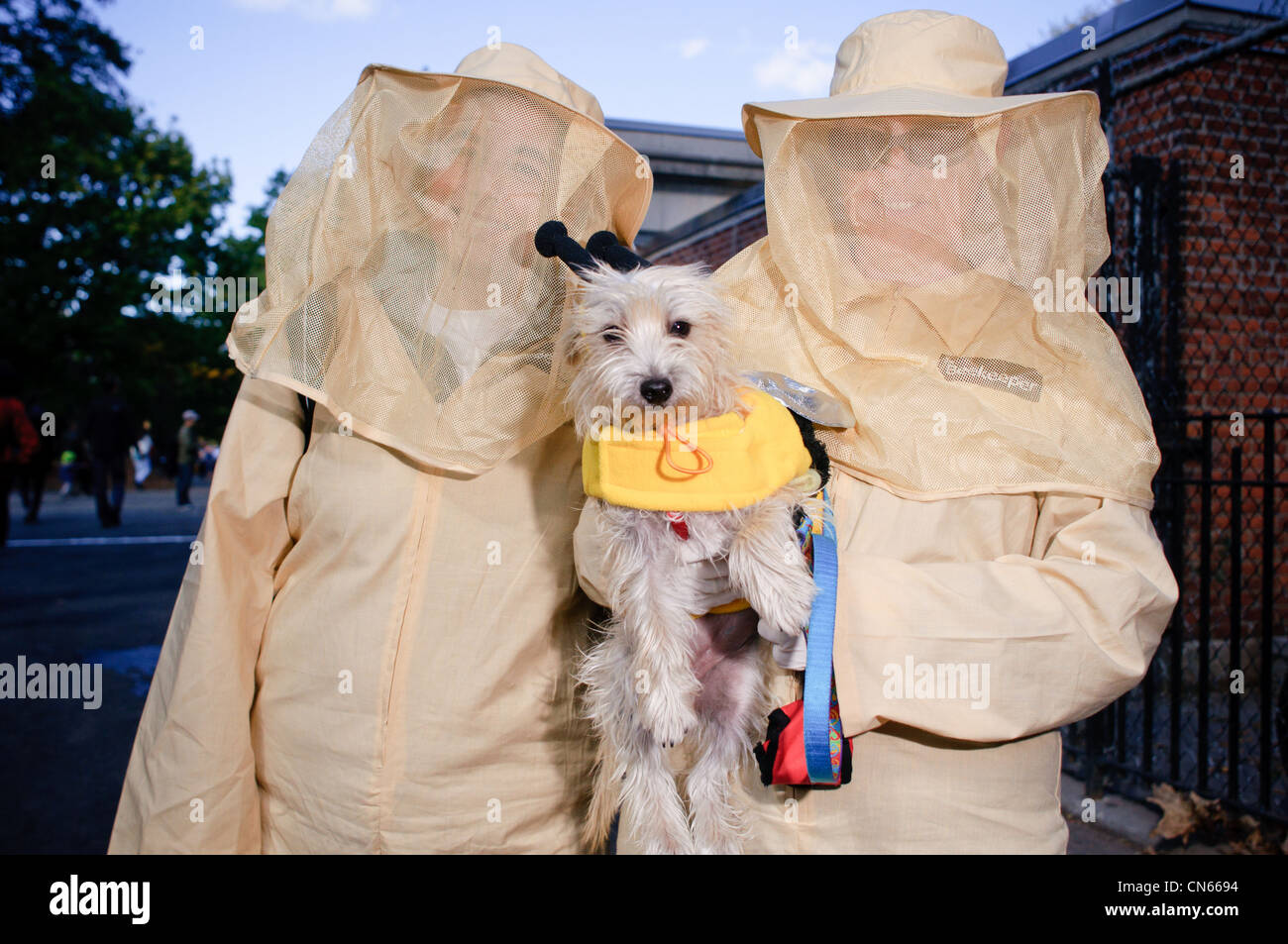 Contestant (a bee) at the Halloween Dog Parade in Tompkins Square Park in Manhattan, New York City. October 22, - Stock Image