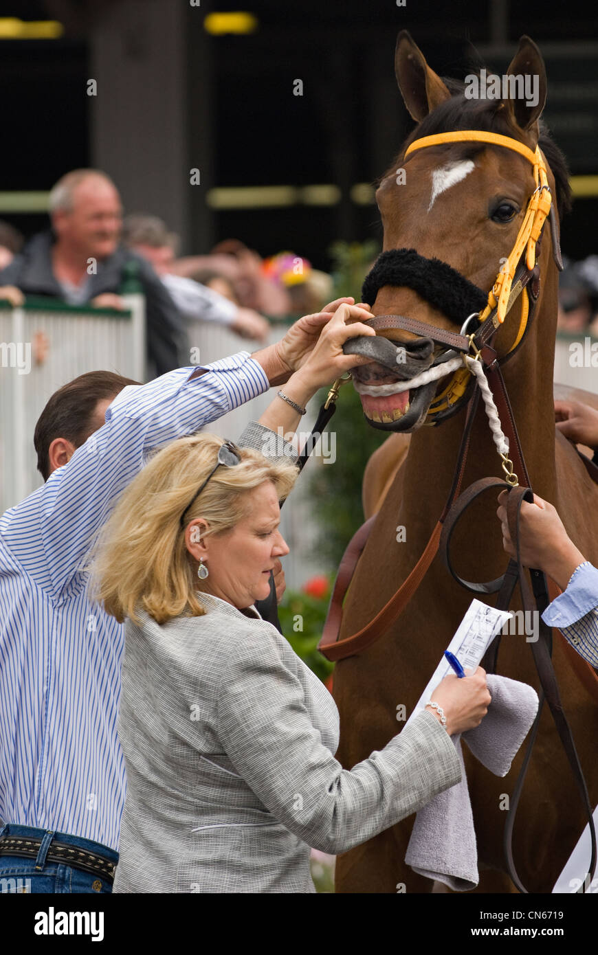 Official Checking Lip Tattoo of Thoroughbred Memorial Maniac before Running the Woodford Reserve Classic at Churchill - Stock Image
