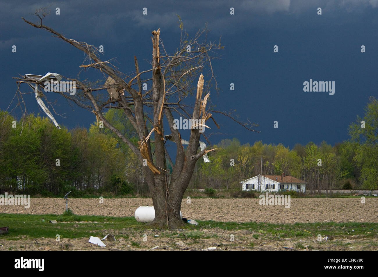 Storm Clouds over Damaged Tree with Debris in Branches from March 2 Tornado in Holton, Indiana - Stock Image