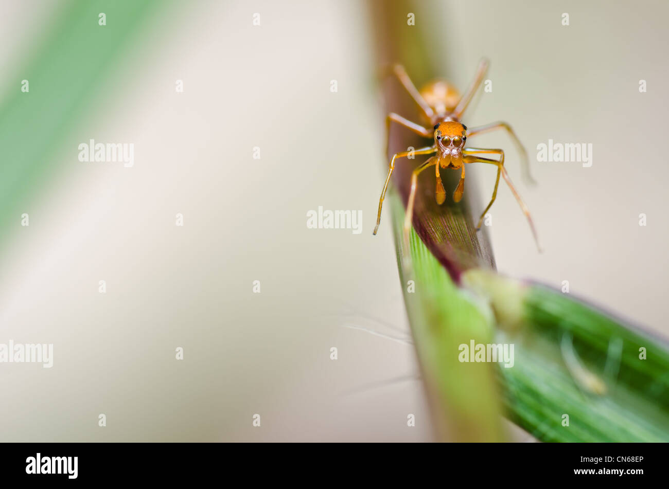 spider in nature or in the garden - Stock Image