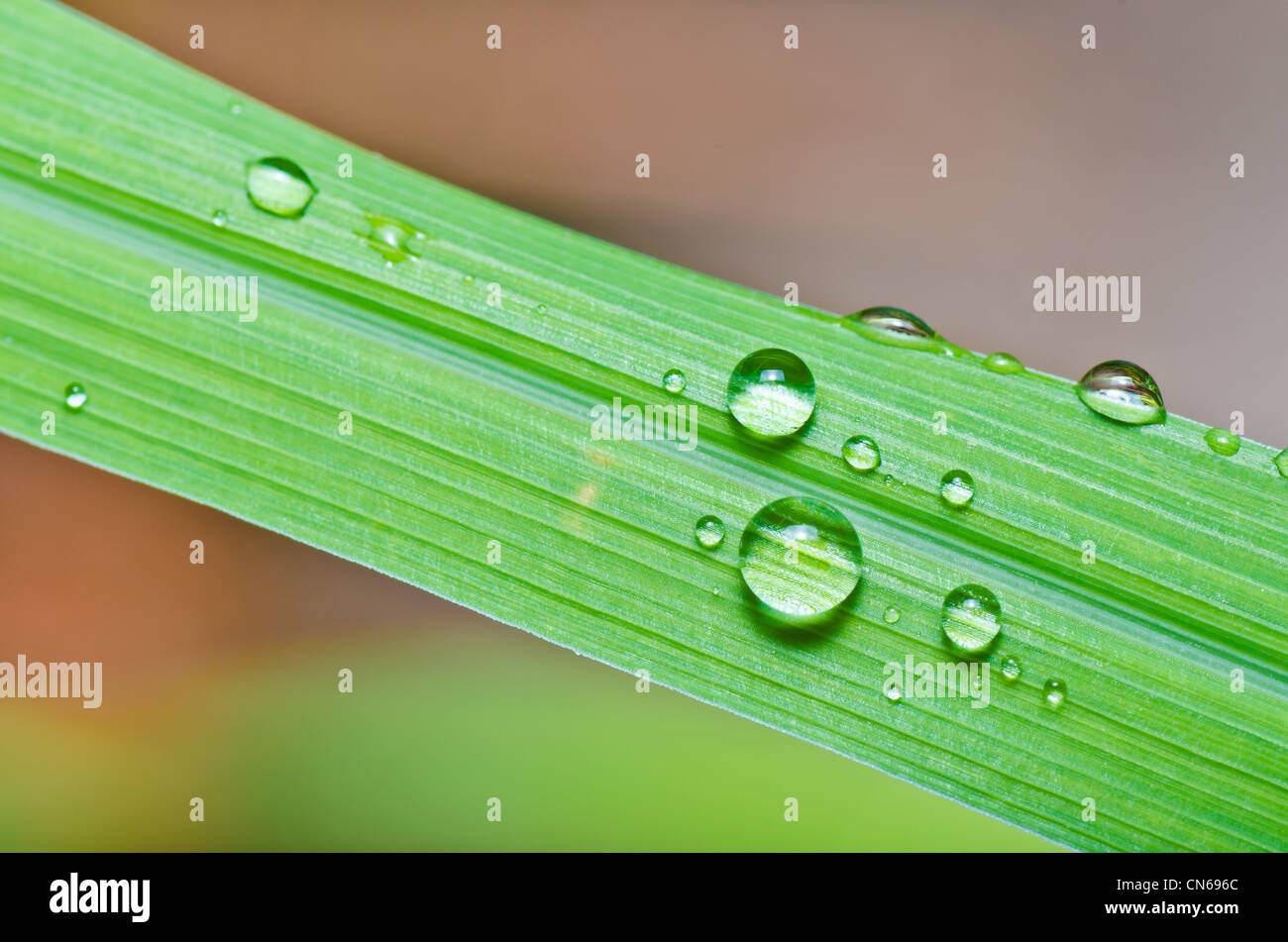 water drops on green leaf in green fresh nature - Stock Photo
