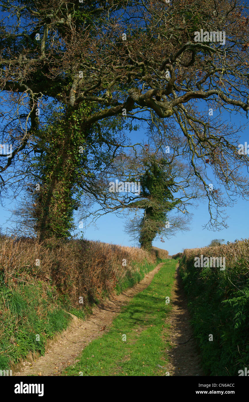 Tree Lined footpath in South Somerset Near Chard - Stock Image