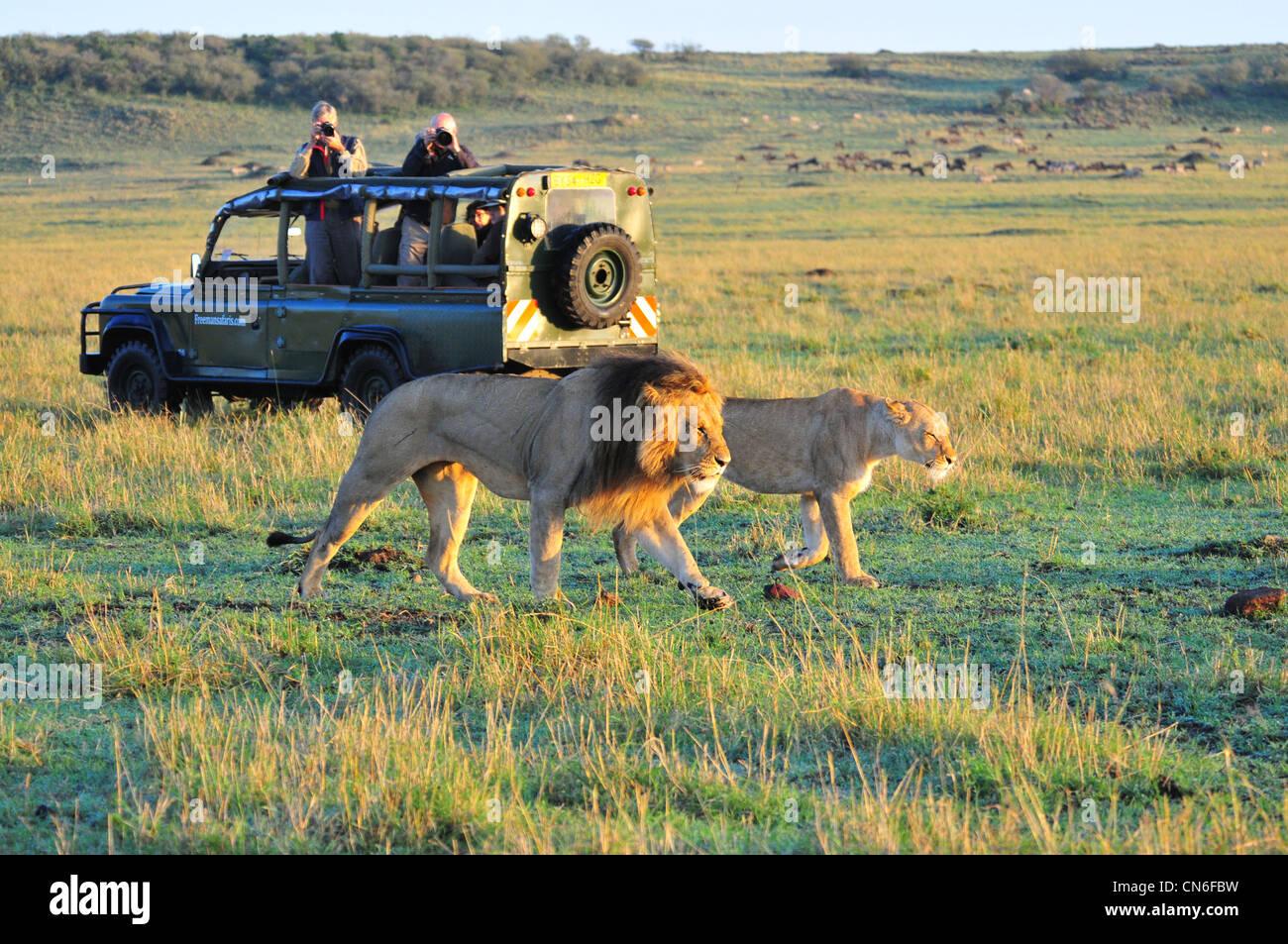 Safari, Masai Mara - Stock Image