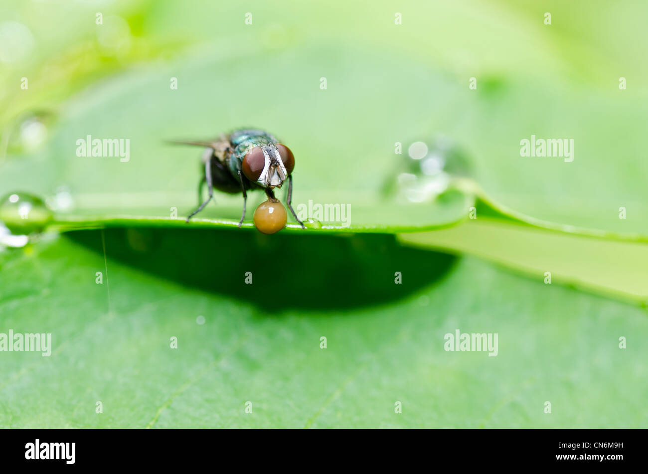 fly in green nature or in the city - Stock Image
