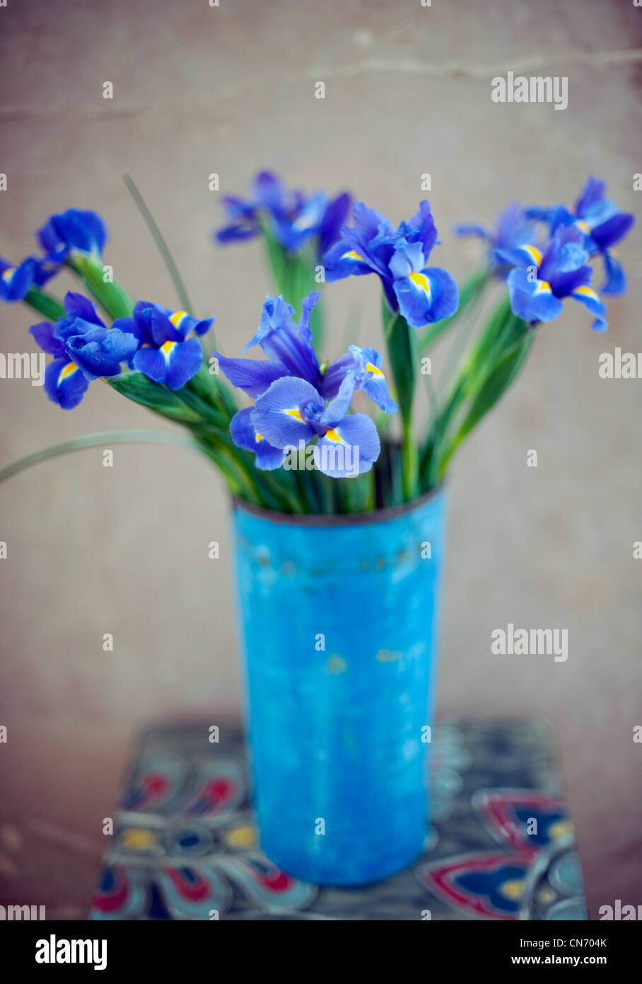 Iris flowers in a vase. - Stock Image