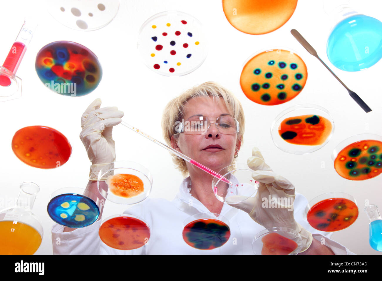 Laboratory technician working in the lab with bacteria cultures in Petri dishes. Seen through a glass table. - Stock Image