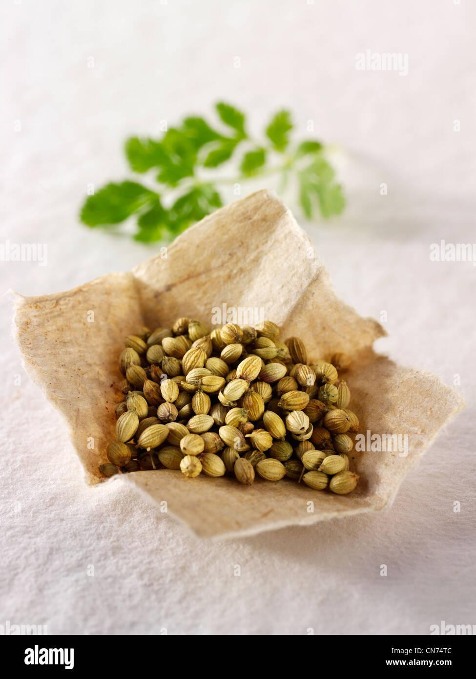 Corinader seeds & coriander leaves composed arrangement Stock Photo