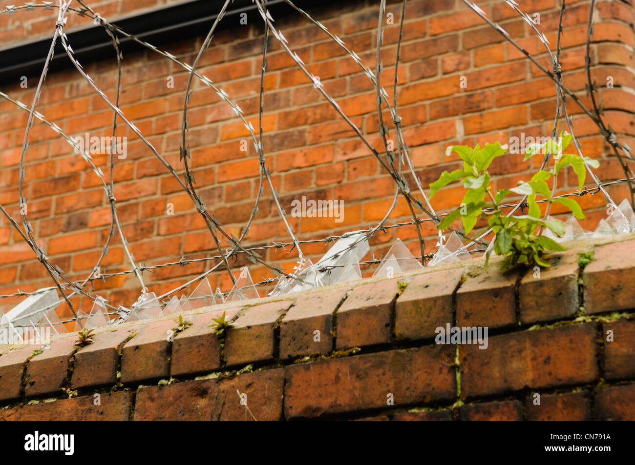 Broken glass and barbed/razor wire on top of a wall to deter burglars - Stock Image