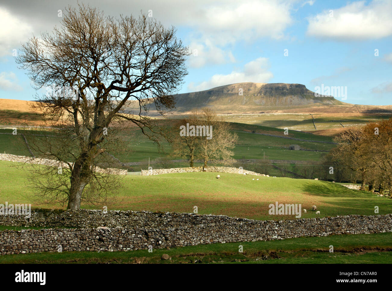 Pen-Y-Ghent mountain seen from Horton in Ribblesdale in the North Yorkshire Dales. - Stock Image