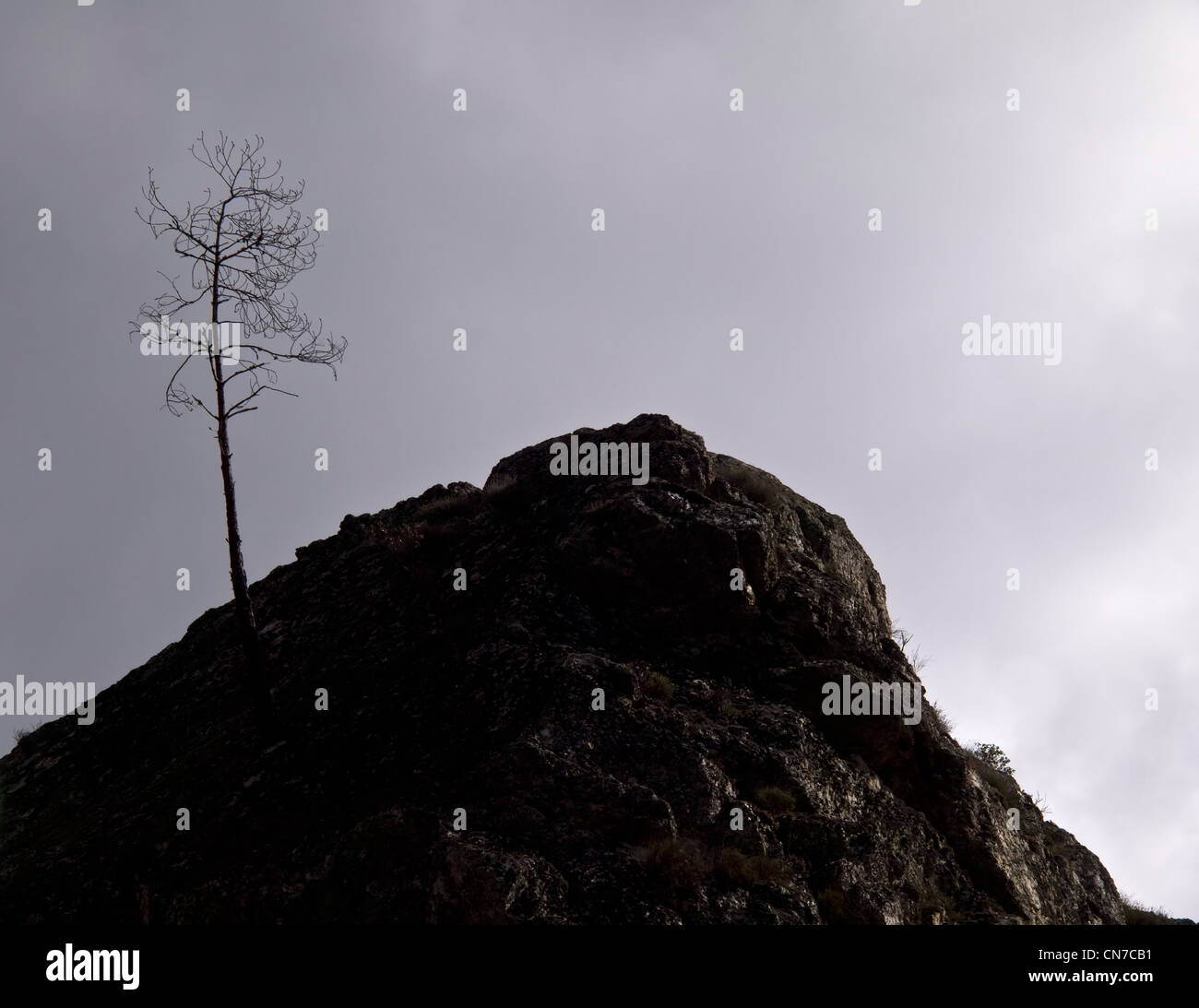 Negativity concept - lonely leafless tree against a cloudy and gloomy overcast sky - Stock Image