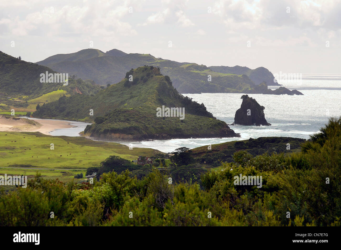 Coastline near Medlands, Great Barrier Island, Hauraki Gulf Auckland New Zealand - Stock Image