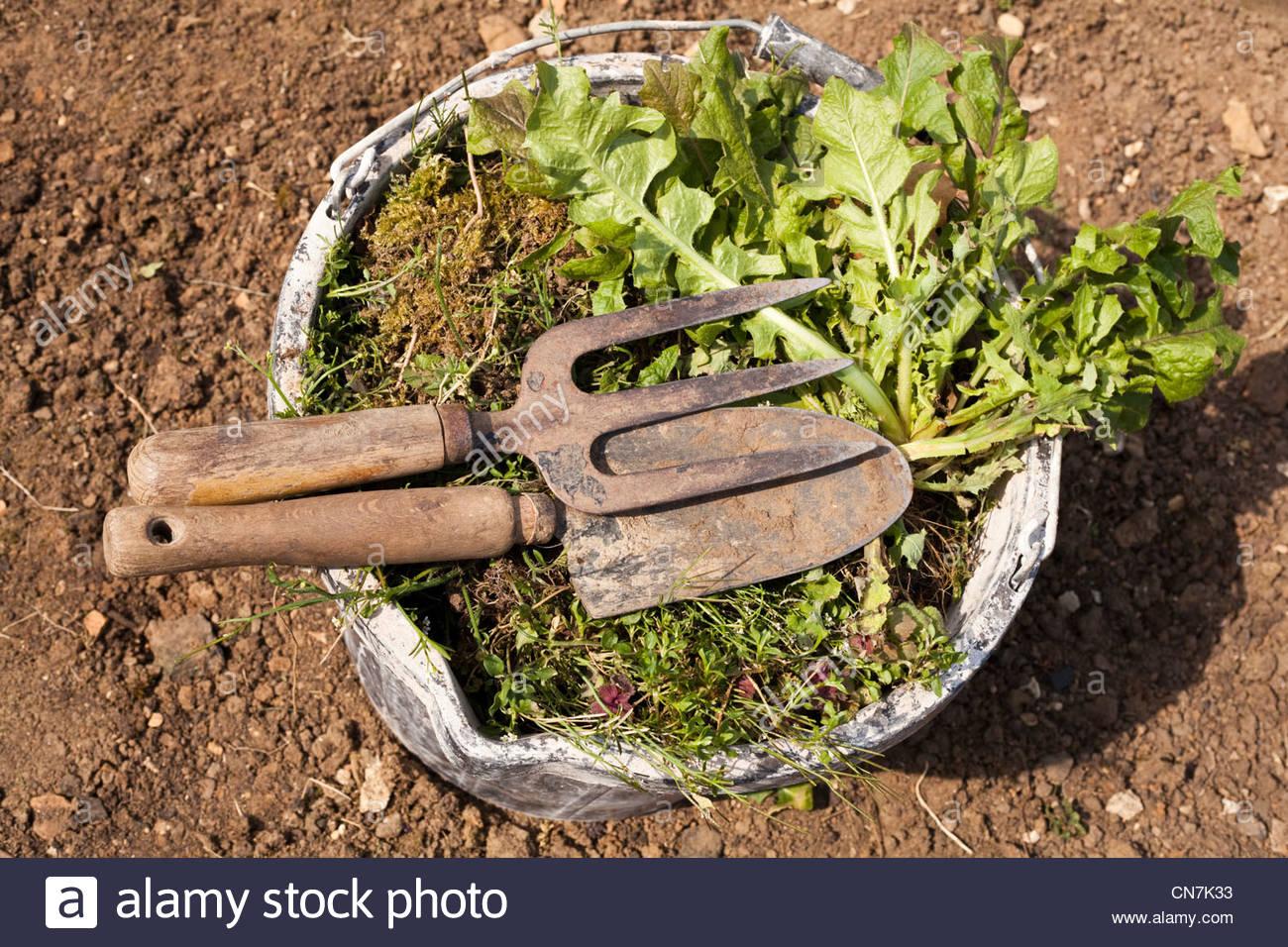 Bucket full of weeds Stock Photo: 47497159 - Alamy