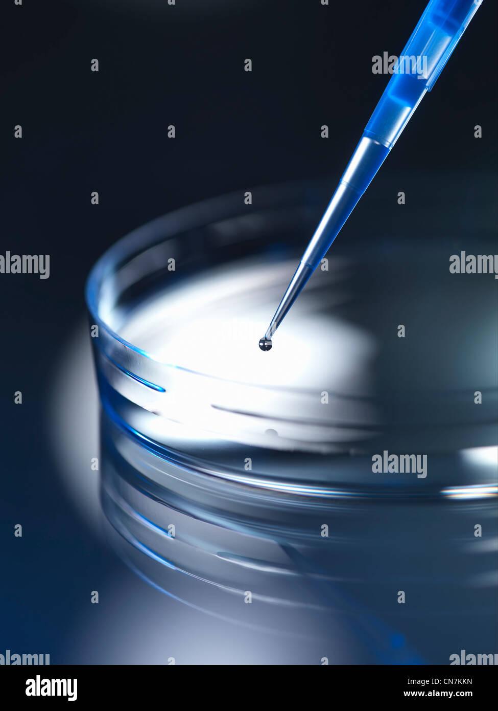 Close up of dropper in petri dish - Stock Image