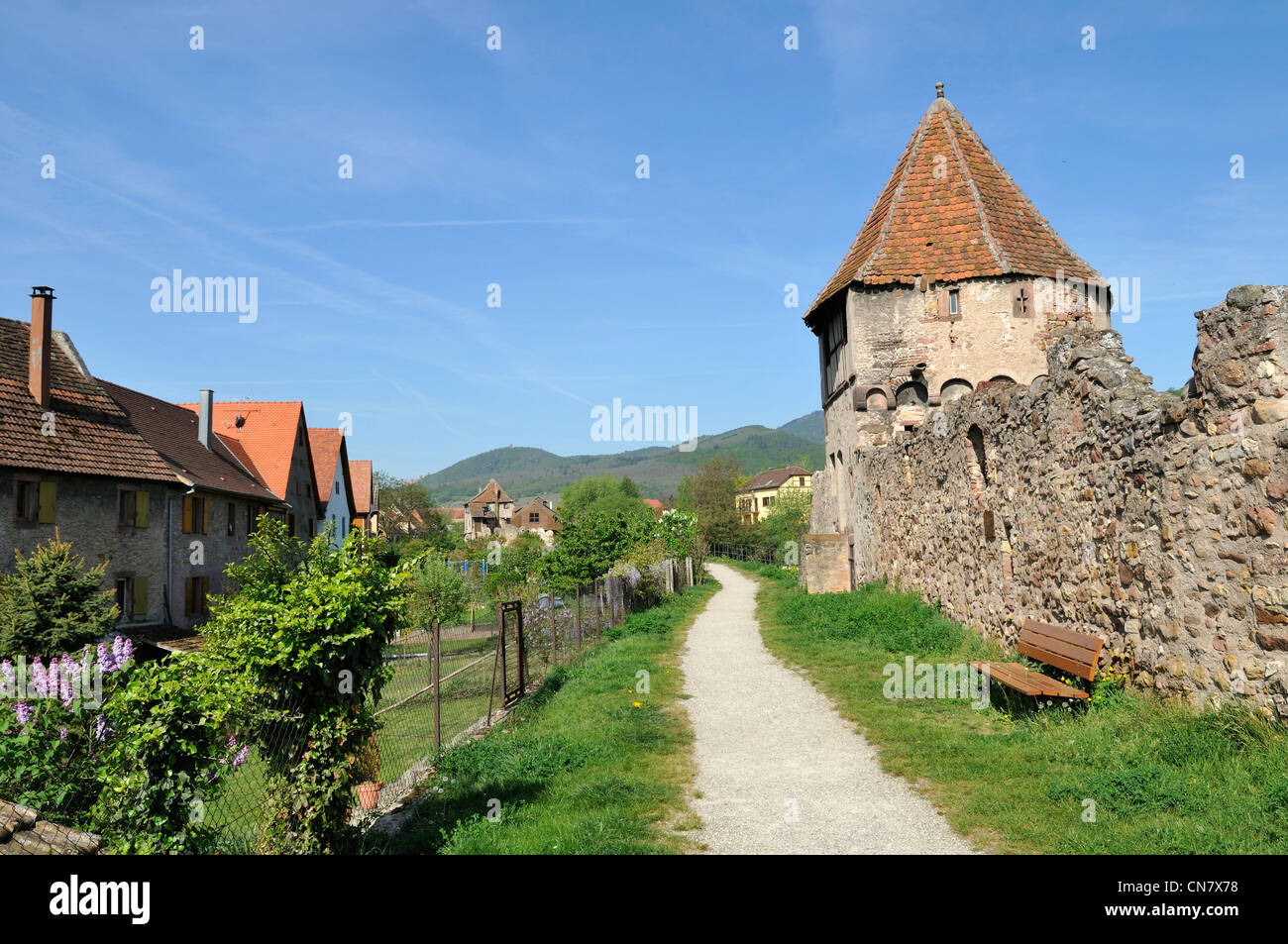 France, Haut Rhin, Bergheim, ramparts of the fourteenth century Powder Tower cantilevered, spring - Stock Image