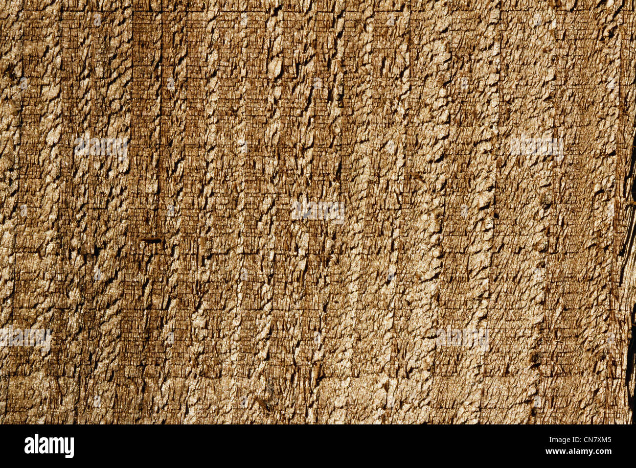 close up of a wooden fence panel showing texture Stock Photo