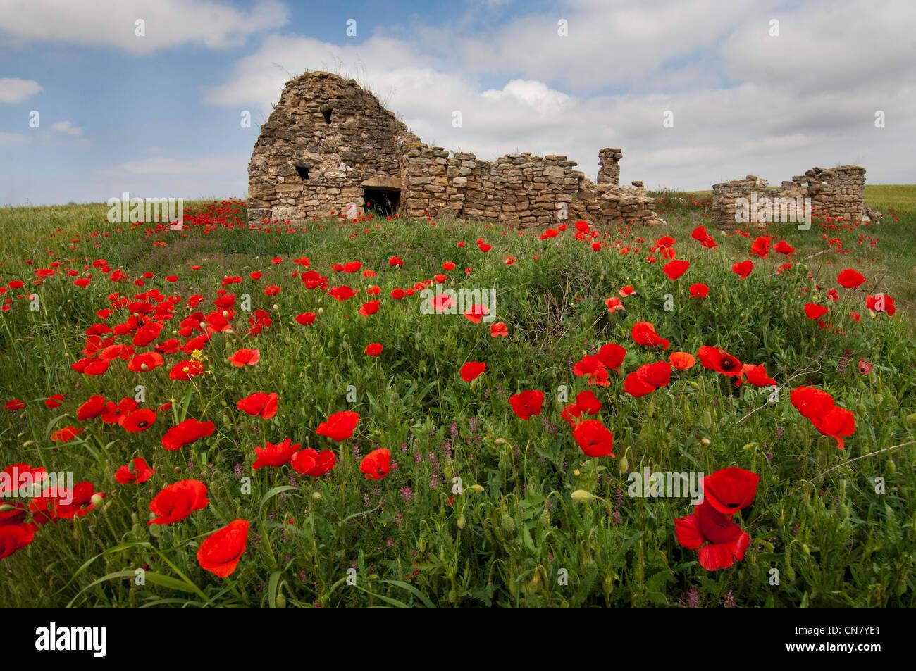 Spain, La Rioja, Logrono, stone shepherd's hut like a provencal borie, amidst a flower - Stock Image