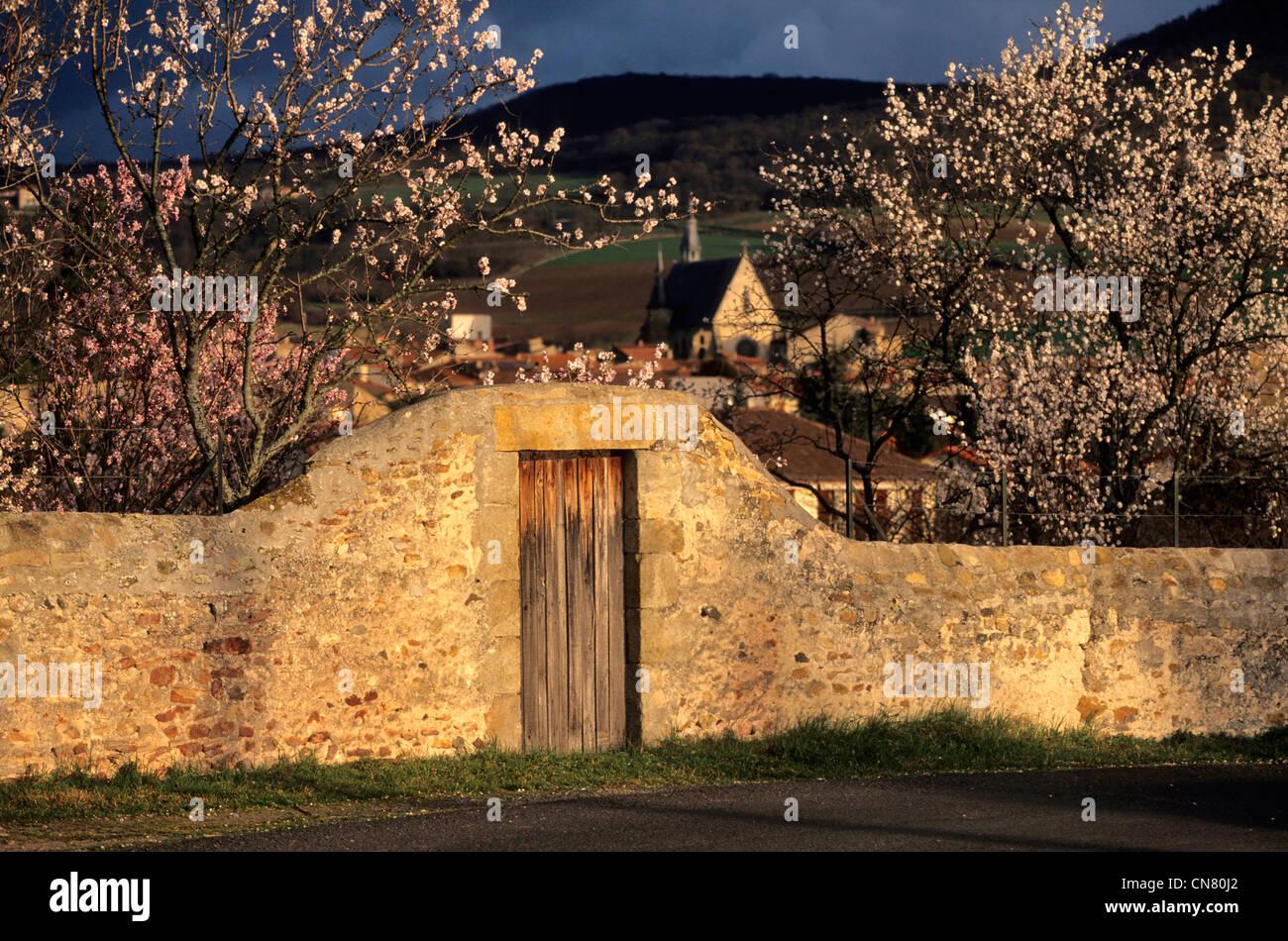 France, Puy de Dome, Vic le Comte, garden wall - Stock Image