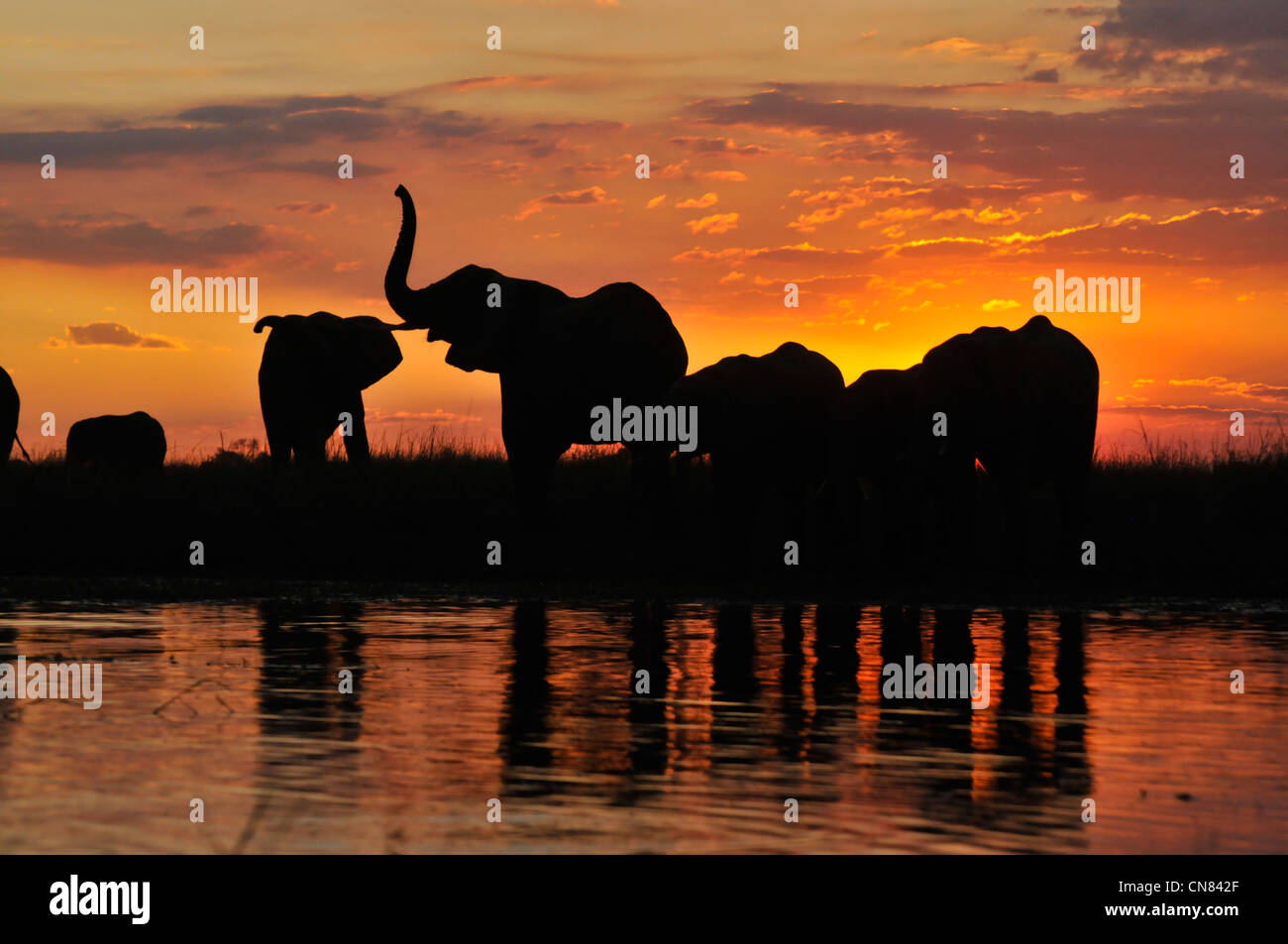 Botswana okavango river Victoria falls - Stock Image