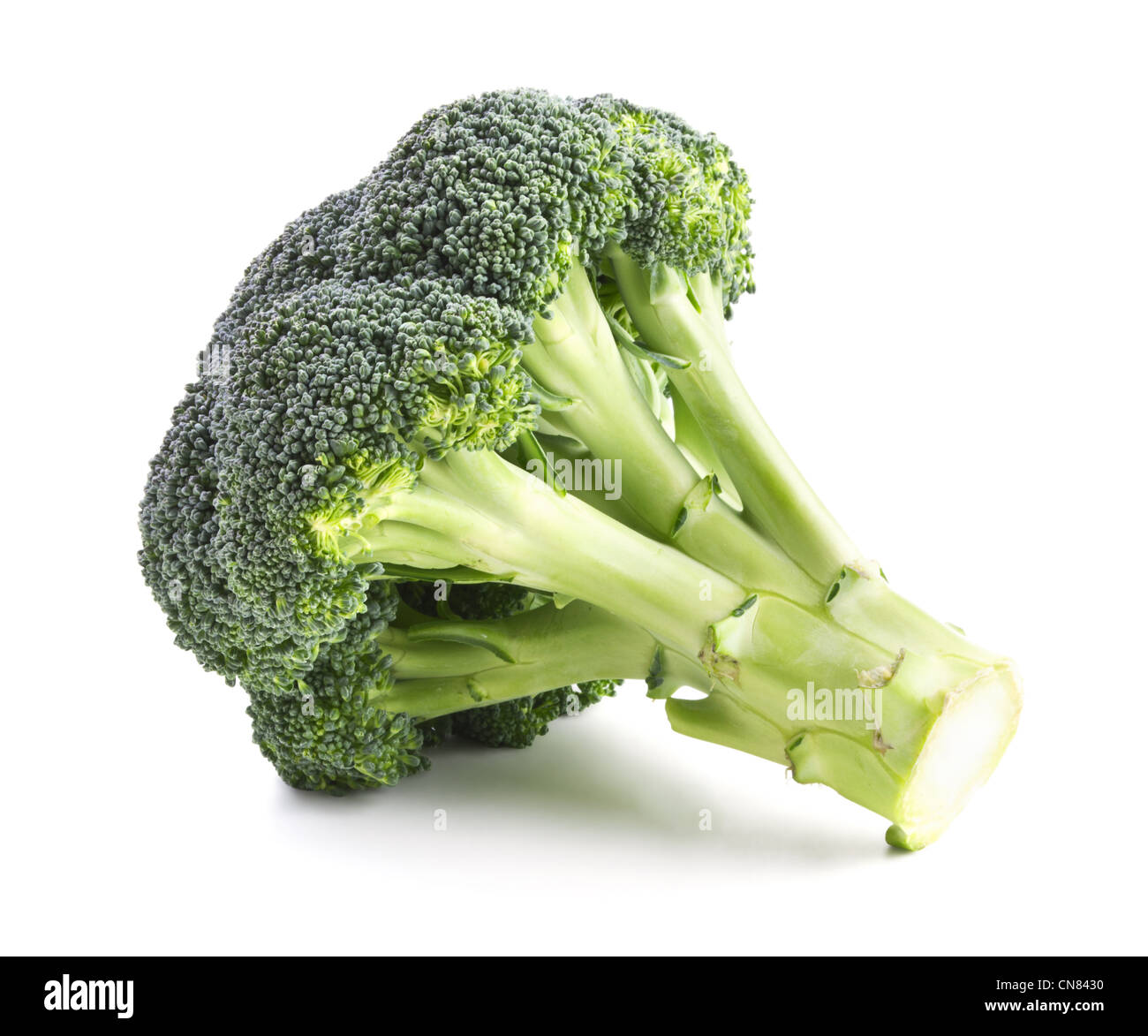 Fresh broccoli isolated on a white background - Stock Image