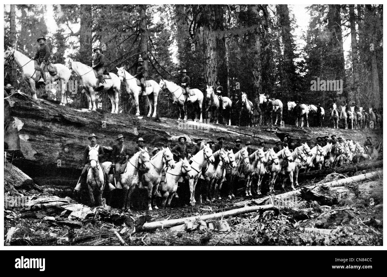 First published 1917 United States Cavalry on a Felled Sequoia lumber tree - Stock Image
