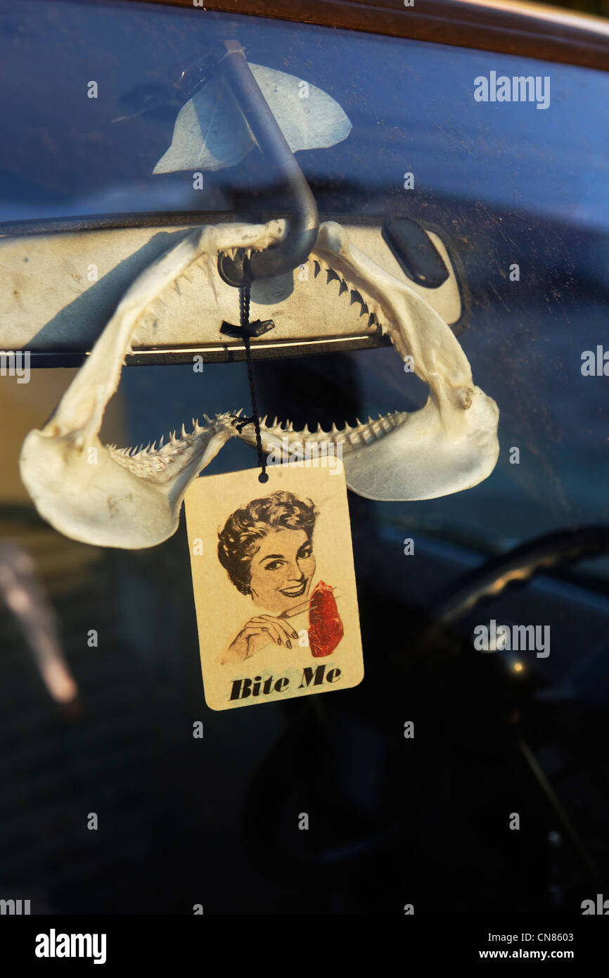 United States, New York City, Brooklyn, jaw of shark hung on a rear view mirror - Stock Image