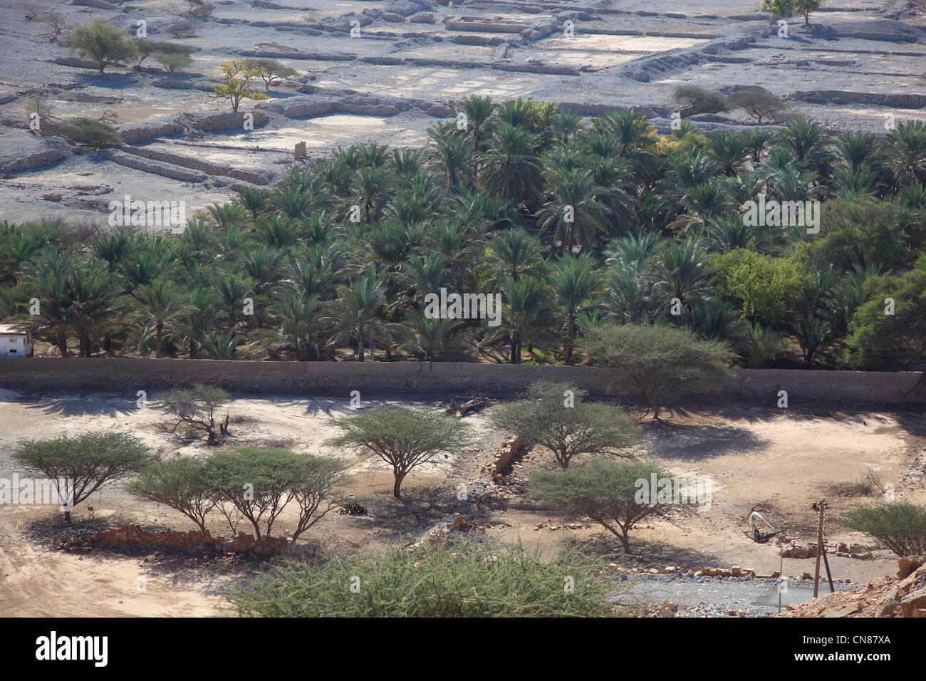 Palmenhain in der Bucht von Bukha, in der omanischen Enklave Musandam, Oman Stock Photo