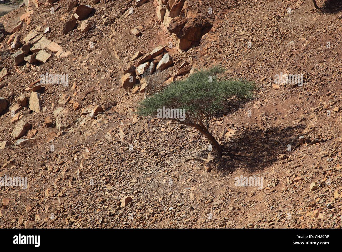 Landschaft in der Bucht von Bukha, in der omanischen Enklave Musandam, Oman Stock Photo