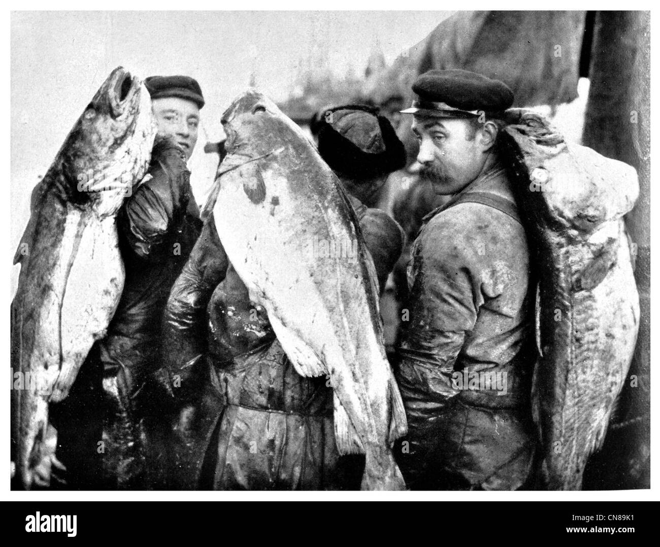 First published 1915 Cod fish fishermen catch haul - Stock Image