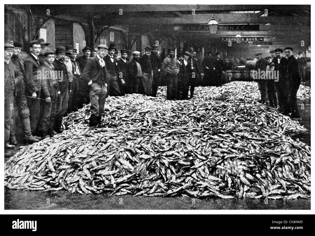 First Published 1915 Herring Auction In Grimsby England