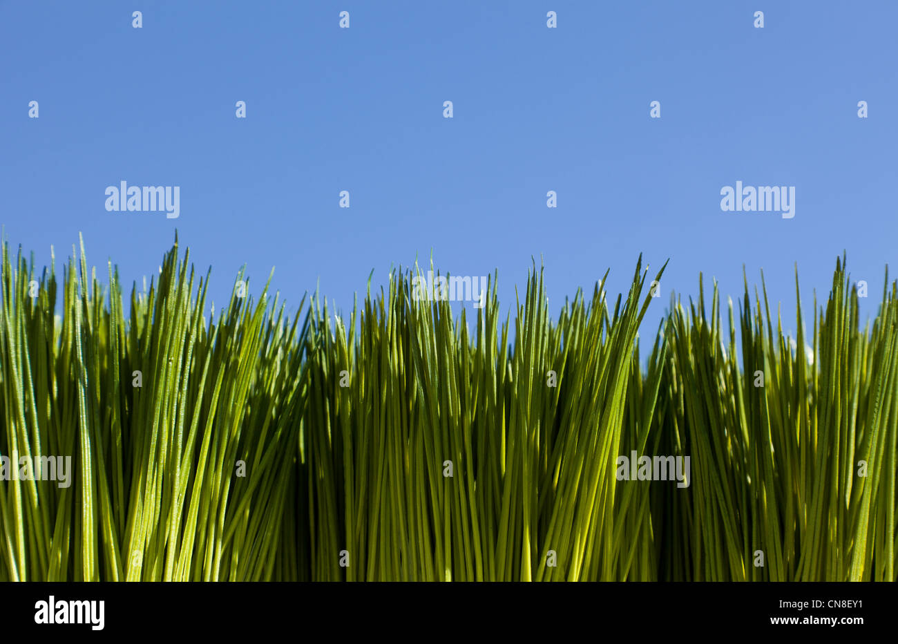 Green Grass and blue sky for background - Stock Image