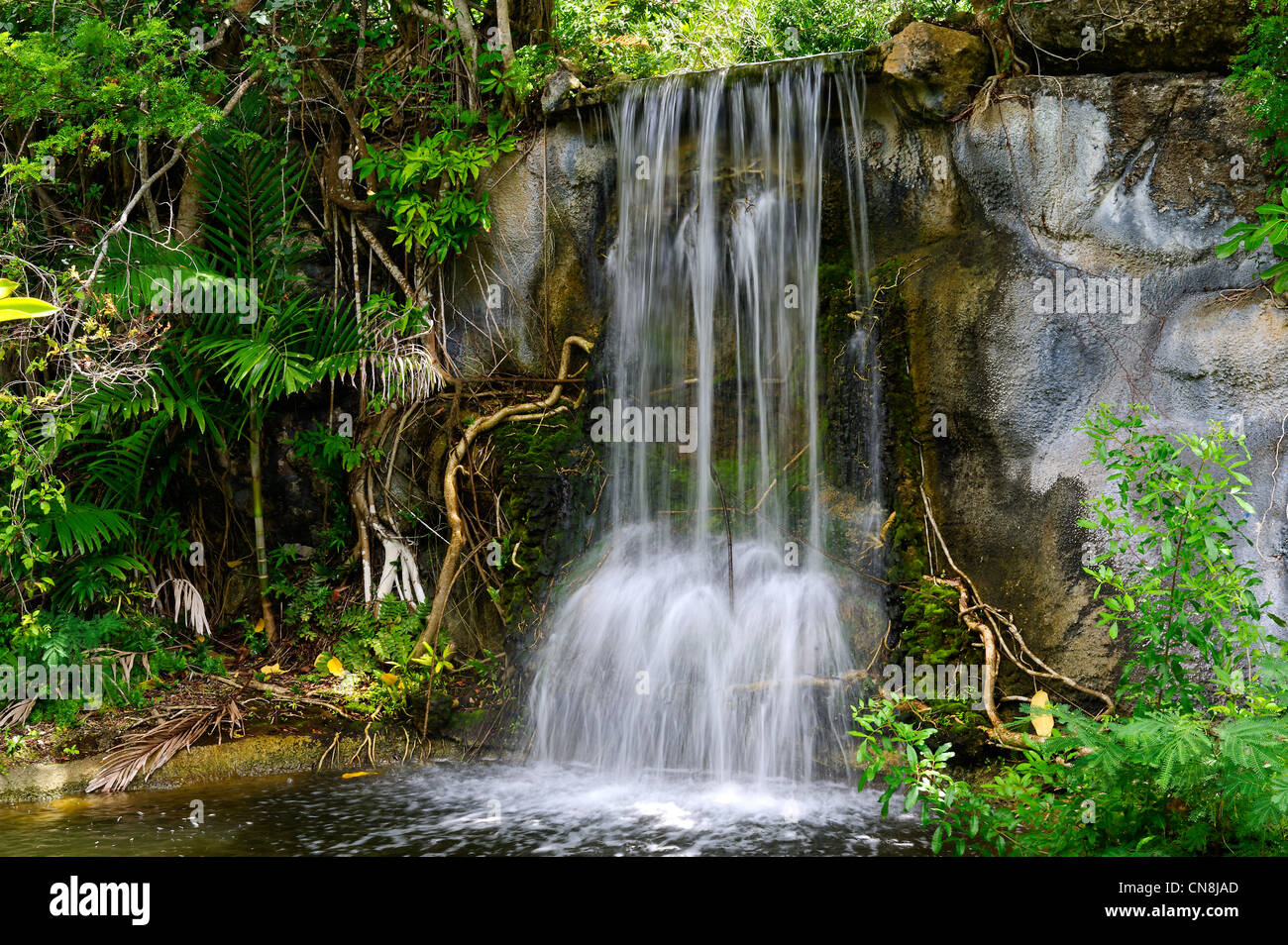 Bahamas, Grand Bahama Island, Freeport, botanical garden, waterfall - Stock Image