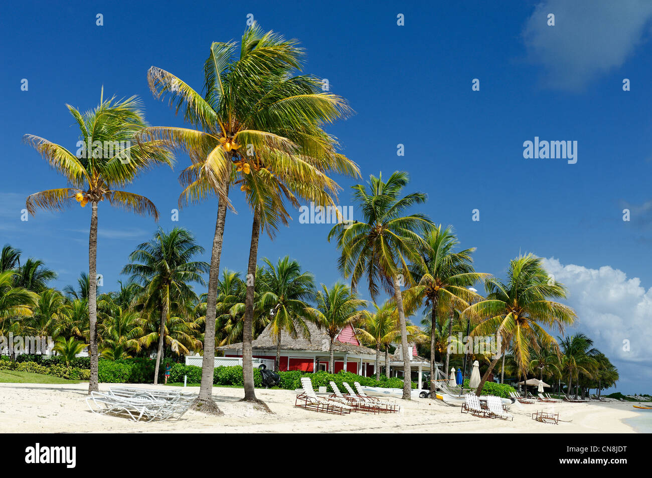 Bahamas, Grand Bahama Island, West End, Old Bahama Bay, white sand beach lined with coconut trees that are home - Stock Image