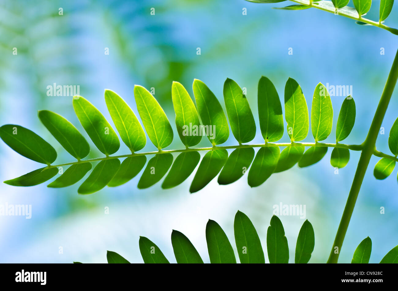 green leaf and blue sky in green fresh nature Stock Photo