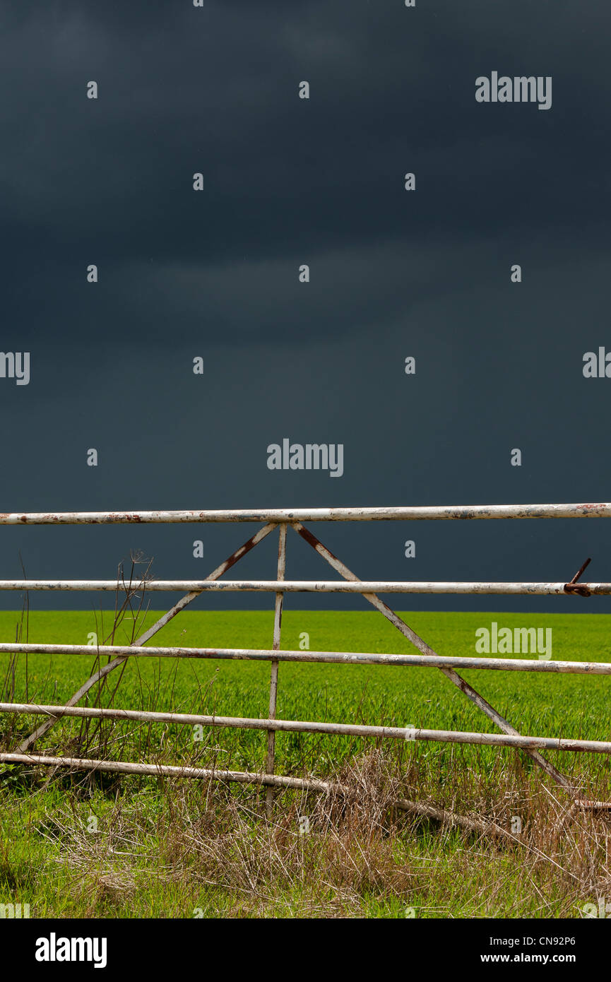 Stormy rain clouds over a sun lit wheat field in the English countryside - Stock Image
