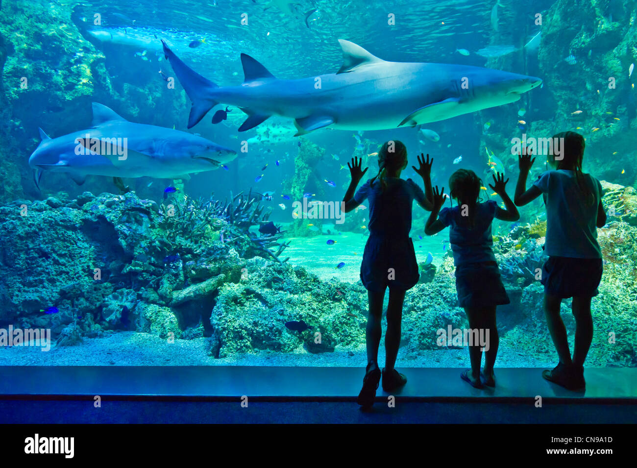 Australia, New South Wales, Sydney, Sydney Aquarium, visitors looking at the sharks (Selachimorpha) - Stock Image