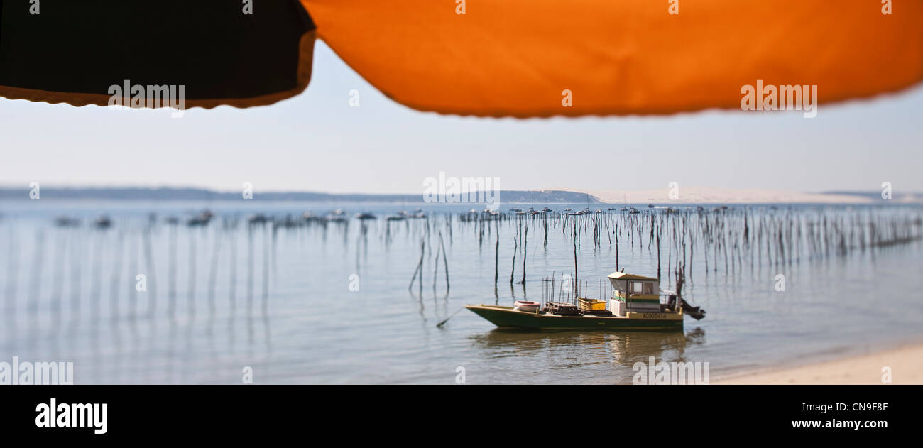 France, Gironde, Arcachon, Cape Ferret, Parasol and cahland oyster on the Bay of Arcachon - Stock Image