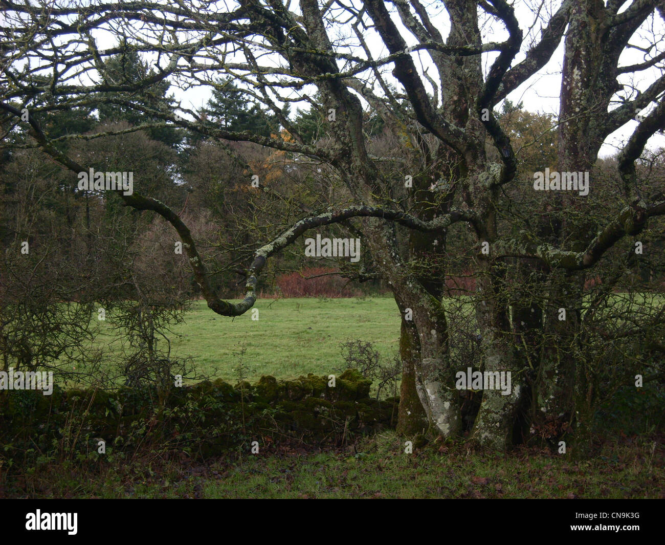 obscure branch - Stock Image