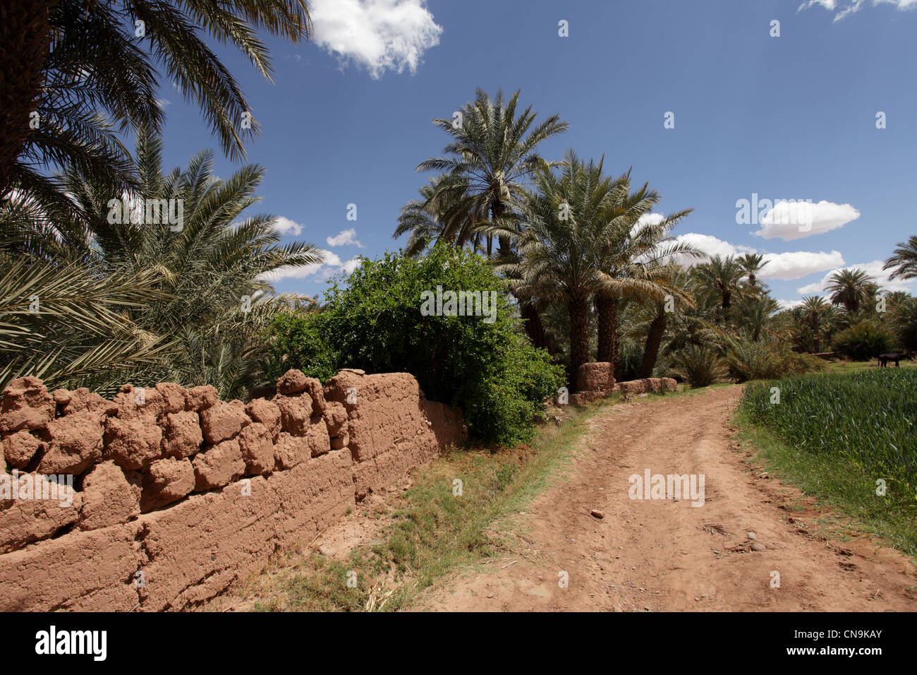 Typical mud-brick built buildings, Draa Valley, southern Morocco, Africa Stock Photo