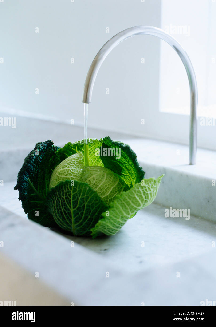 Head of cabbage under faucet - Stock Image