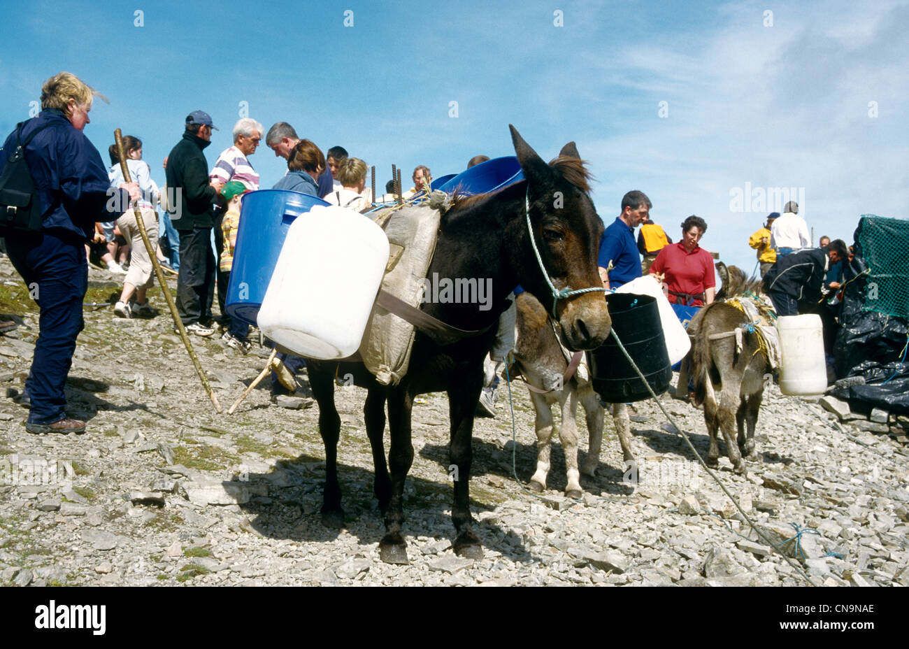 Donkeys carry supplies to the summit of Croagh Patrick, Ireland's celebrated  pilgrimage on 'Reek Sunday' - Stock Image