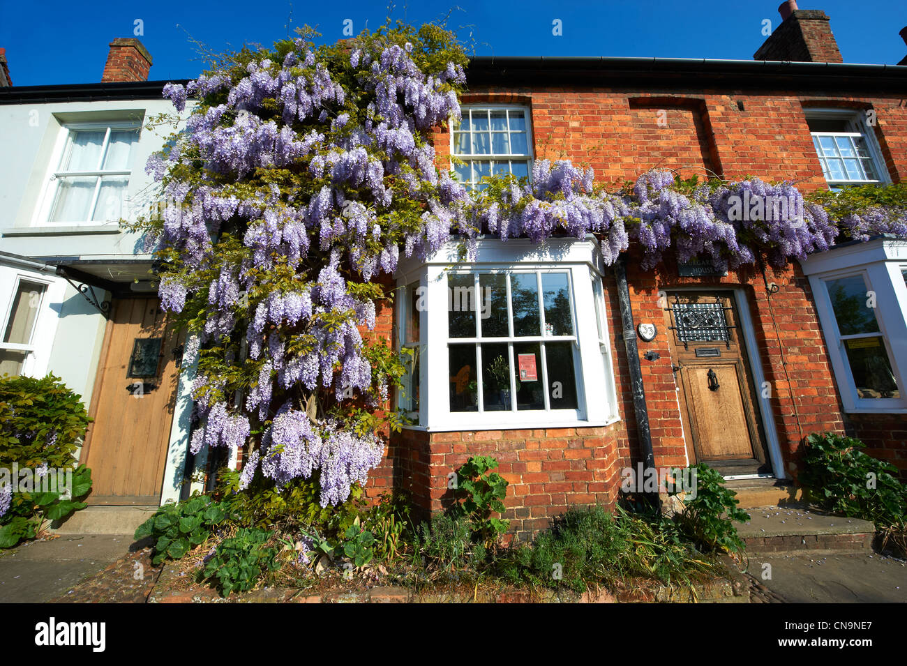Town cottages with wisteria growing on them. Buckingham High Street, Bucks - Stock Image