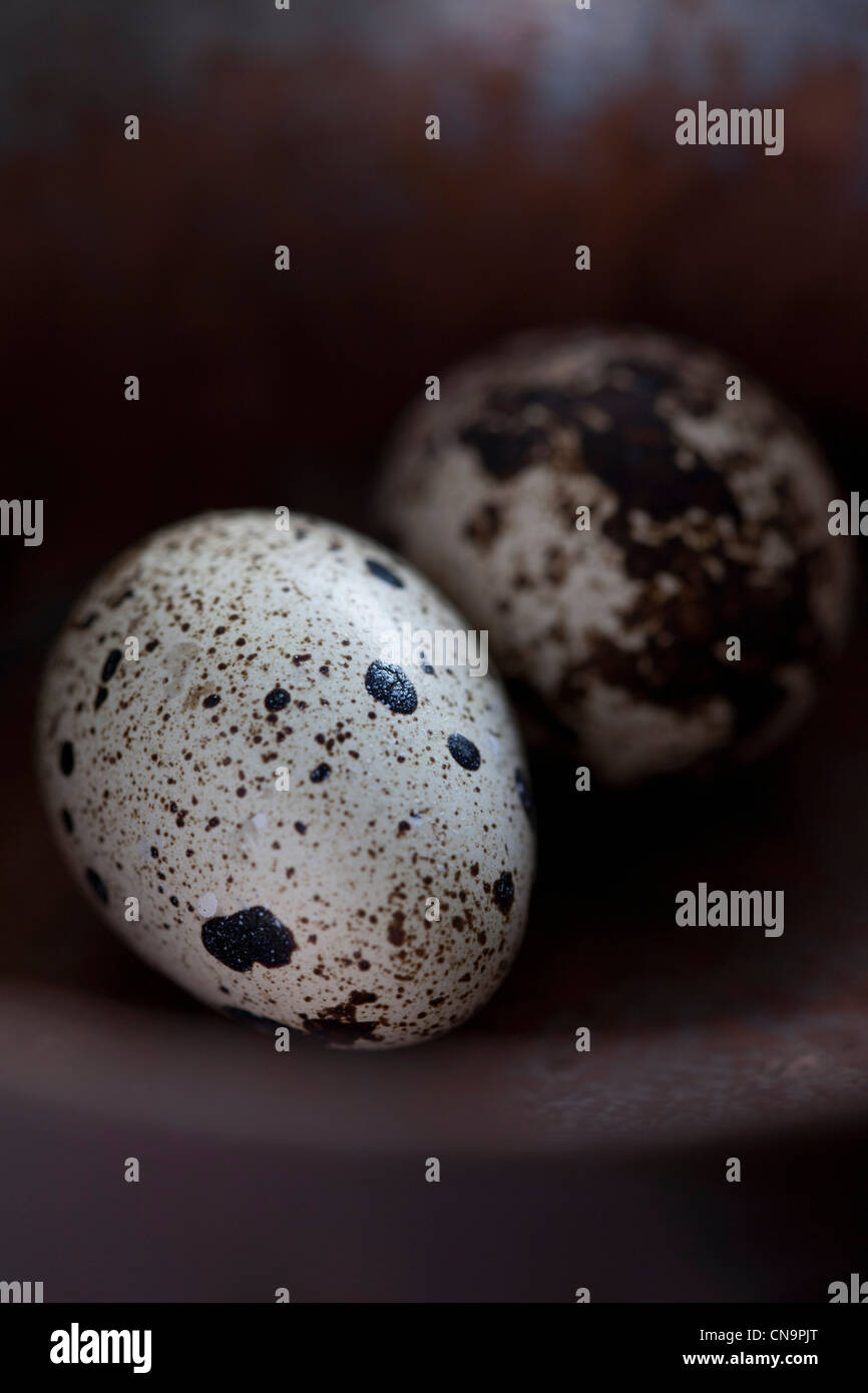 Close up of quail eggs - Stock Image