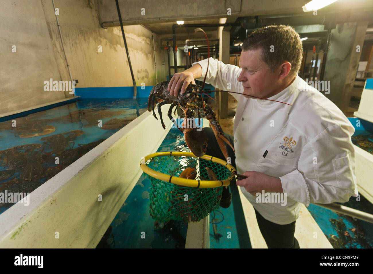 France, Finistere, Roscoff, Loïc Le Bail, chef at the Yachtsman Hotel Brittany, chooses his lobster to Viviers - Stock Image