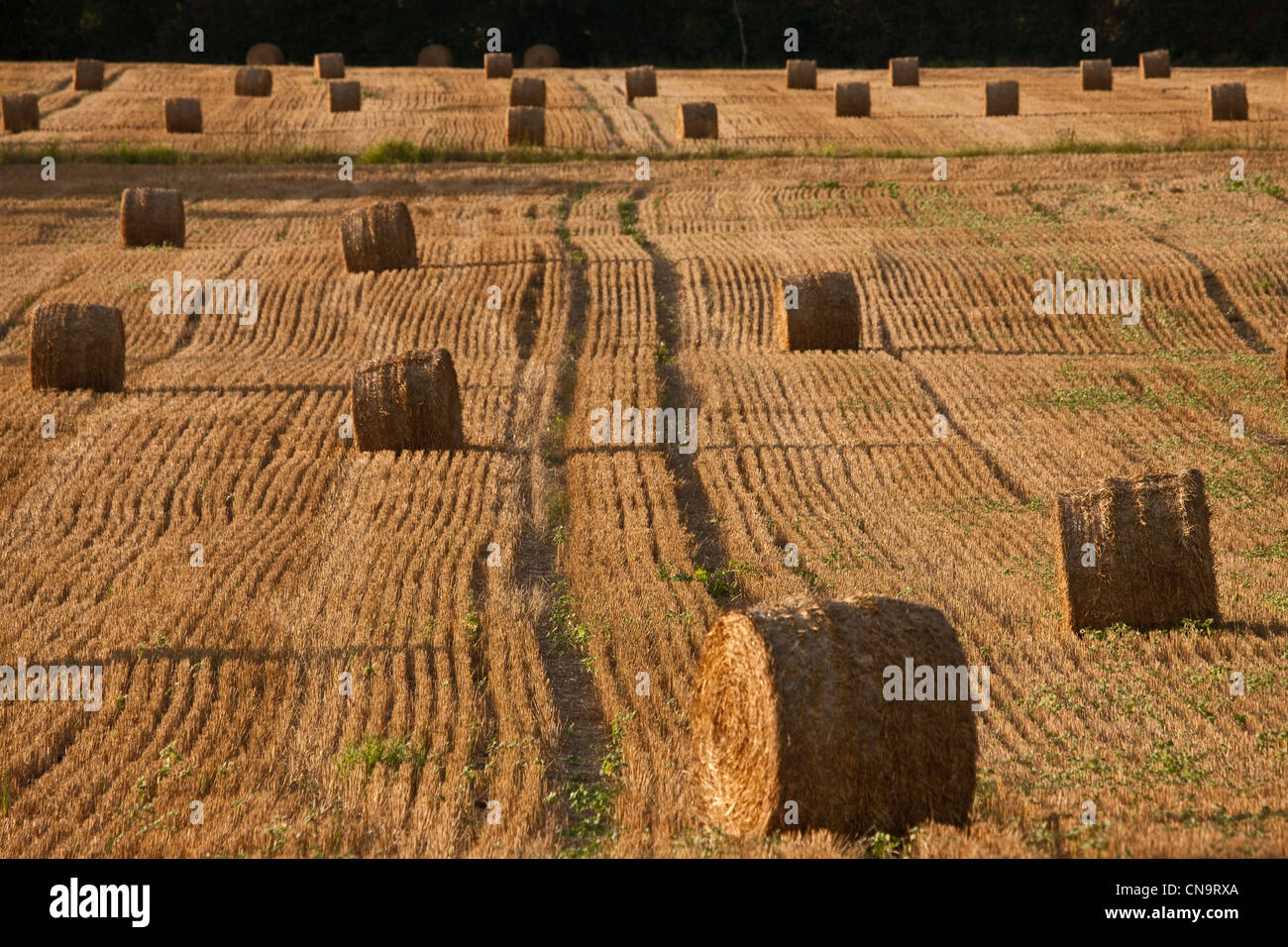 France, Gers, near Condom, Agricultural Landscape, rolls of hay in the field after harvest - Stock Image