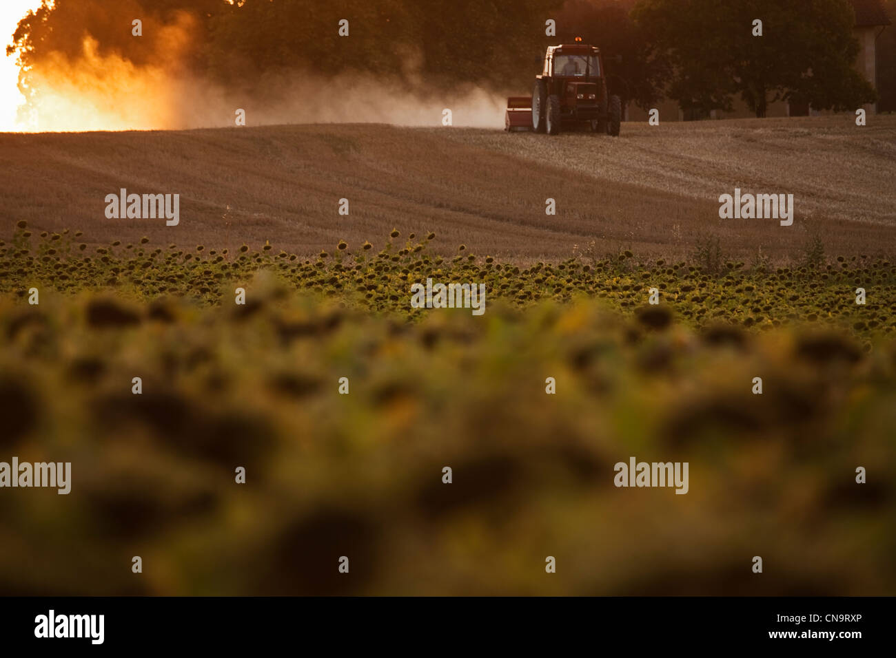 France, Gers, near Condom, Agricultural Landscape, sunflower field and tractor - Stock Image