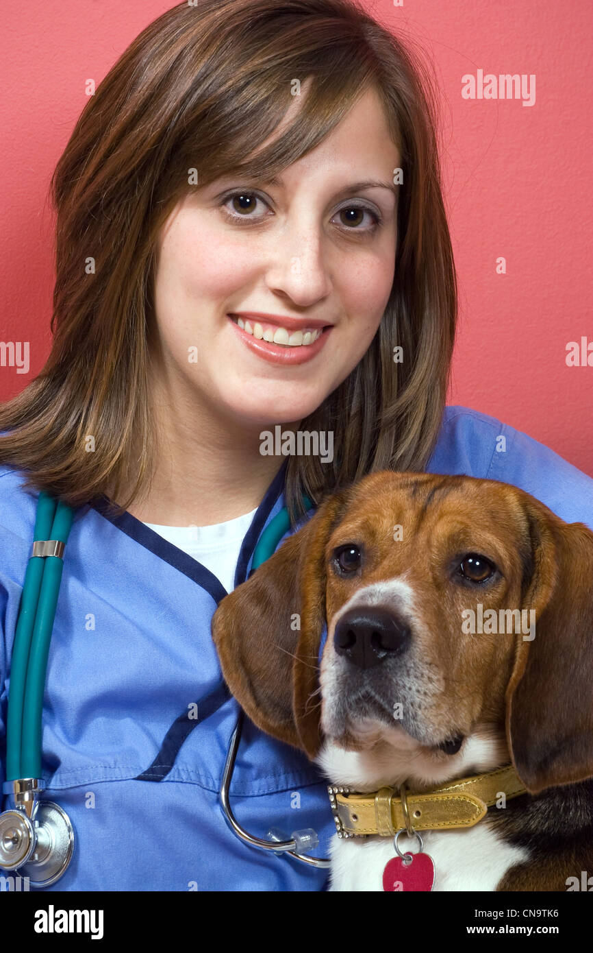 A veterinarian posing with a purebred beagle dog. - Stock Image